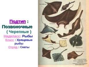 Подтип : Позвоночные ( Черепные ) Надкласс: Рыбы Класс : Хрящевые рыбы Отряд