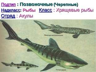 Подтип : Позвоночные (Черепные) Надкласс: Рыбы Класс : Хрящевые рыбы Отряд :
