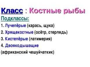 Класс : Костные рыбы Подклассы: 1. Лучепёрые (карась, щука) 2. Хрящекостные (