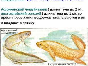 Подкласс: Двоякодышащие рыбы. Африканский чешуйчаткик ( длина тела до 2 м), а
