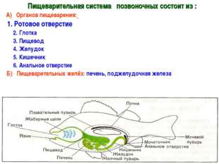 Пищеварительная система позвоночных состоит из : А) Органов пищеварения: 1.