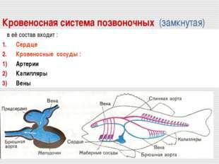 Кровеносная система позвоночных (замкнутая) в её состав входит : Сердце Крове
