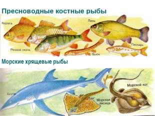 Пресноводные костные рыбы Морские хрящевые рыбы
