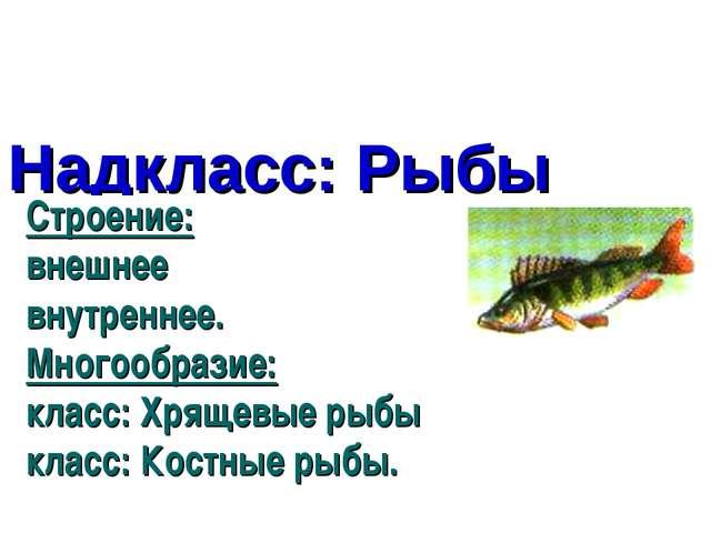 Надкласс: Рыбы Строение: внешнее внутреннее. Многообразие: класс: Хрящевые ры...
