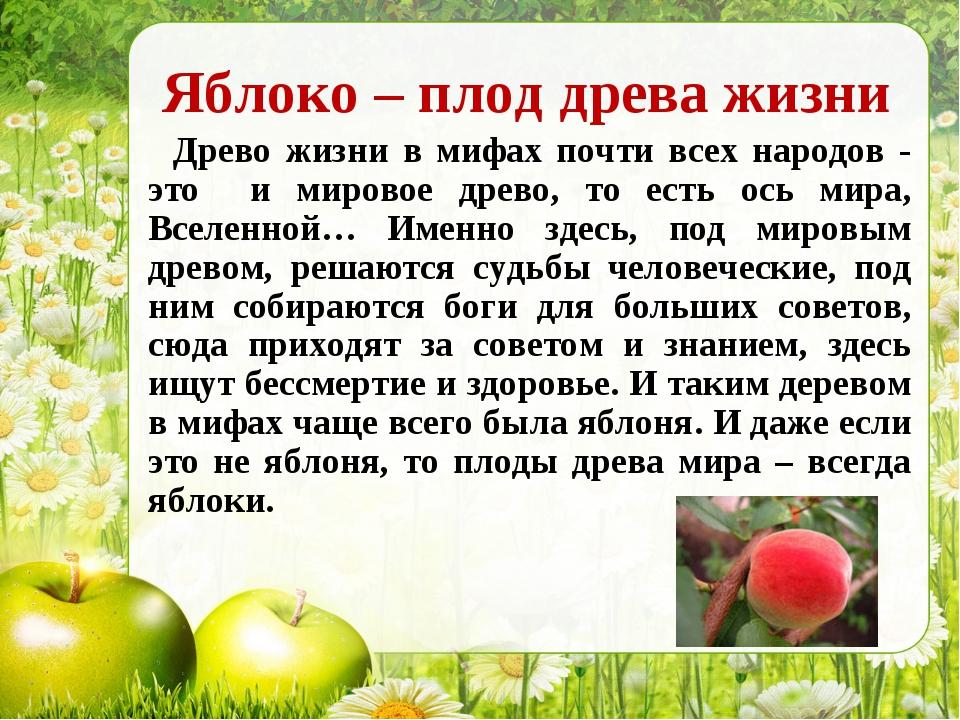Яблоко – плод древа жизни Древо жизни в мифах почти всех народов - это и миро...