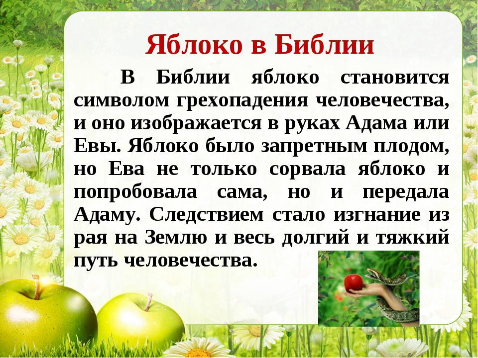 Яблоко в Библии В Библии яблоко становится символом грехопадения человечества...