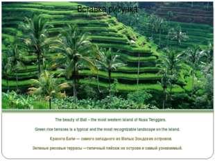 The beauty of Bali – the most western island of Nusa Tenggara. Green rice te