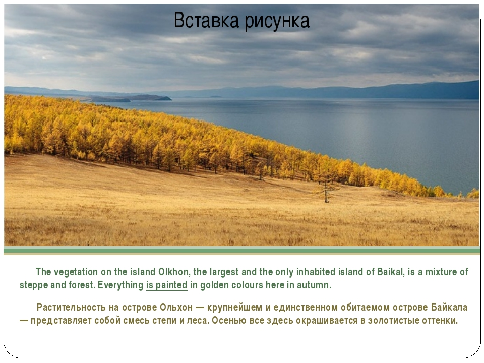 The vegetation on the island Olkhon, the largest and the only inhabited isla...