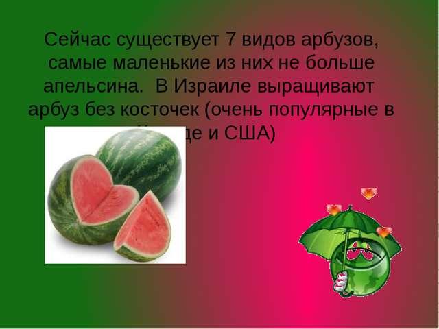 Сейчас существует 7 видов арбузов, самые маленькие из них не больше апельсина...