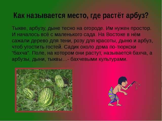 Как называется место, где растёт арбуз? Тыкве, арбузу, дыне тесно на огороде....