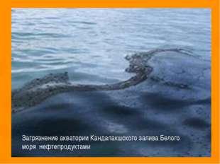 Загрязнение акватории Кандалакшского залива Белого моря нефтепродуктами
