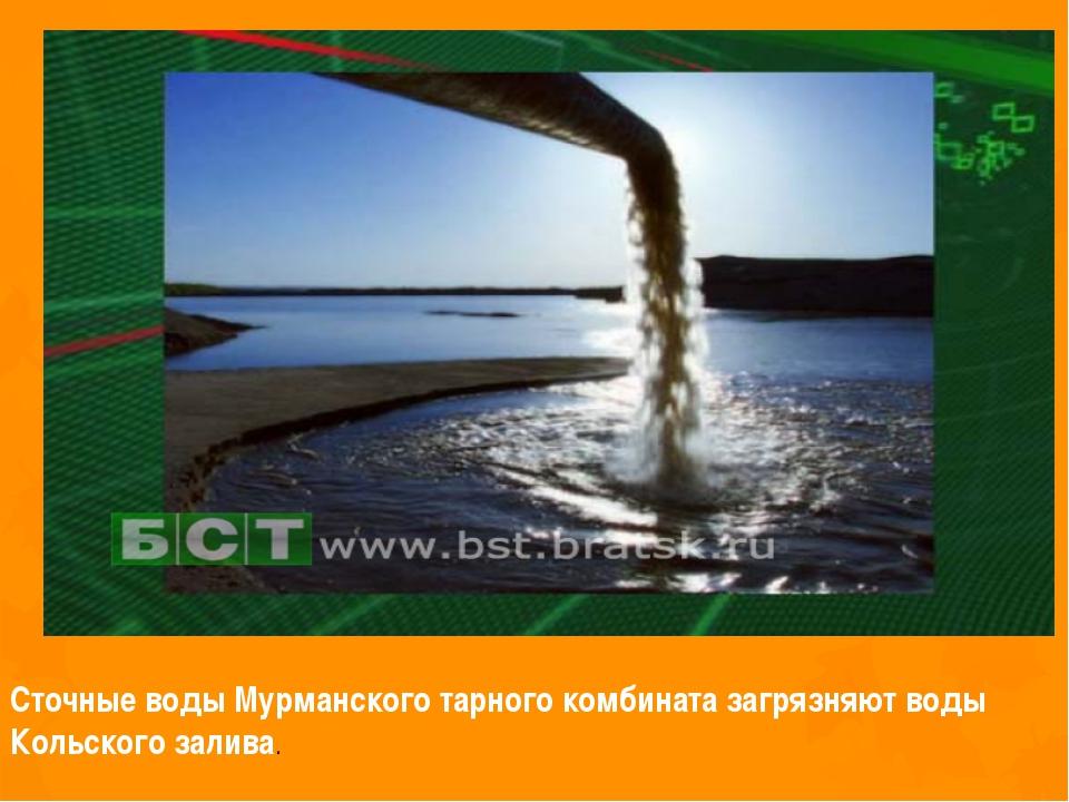 Сточные воды Мурманского тарного комбината загрязняют воды Кольского залива.