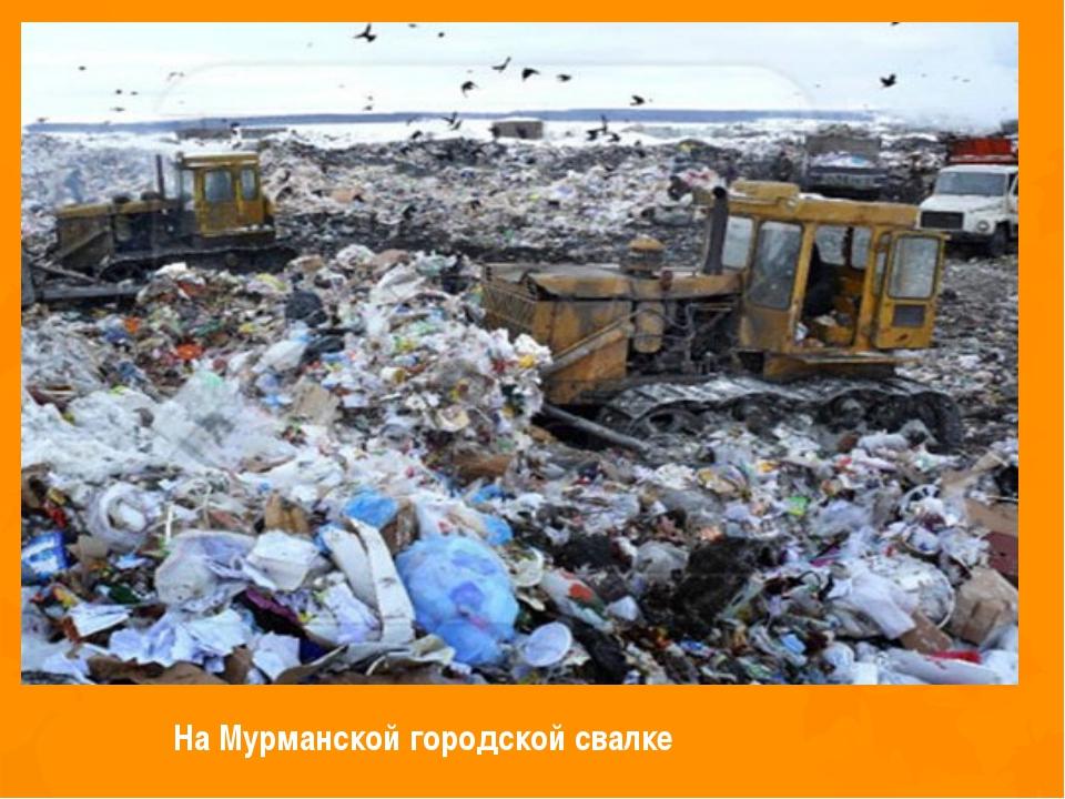 На Мурманской городской свалке