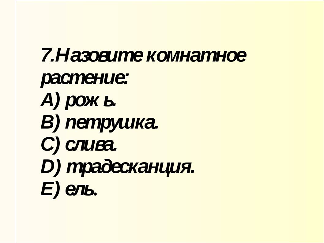 7.Назовите комнатное растение: A) рожь. B) петрушка. C) слива. D) традесканци...