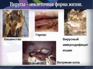 Герпес Бешенство Вирусный иммунодефицит кошек Ветряная оспа