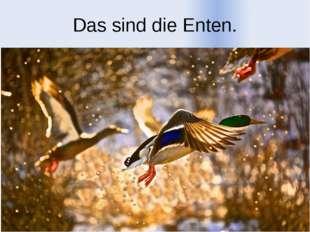 Das sind die Enten.