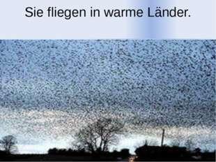 Sie fliegen in warme Länder.