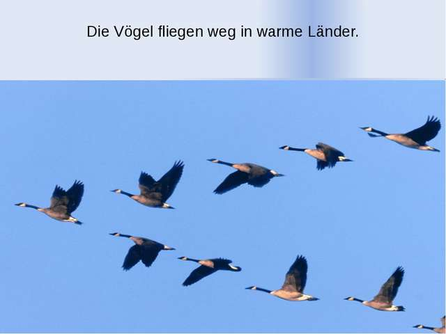 Die Vögel fliegen weg in warme Länder.