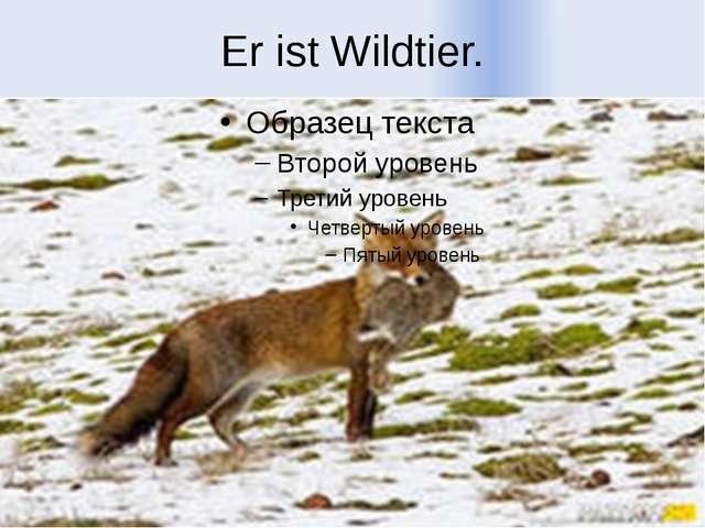 Er ist Wildtier.