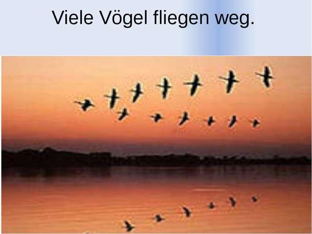 Viele Vögel fliegen weg.
