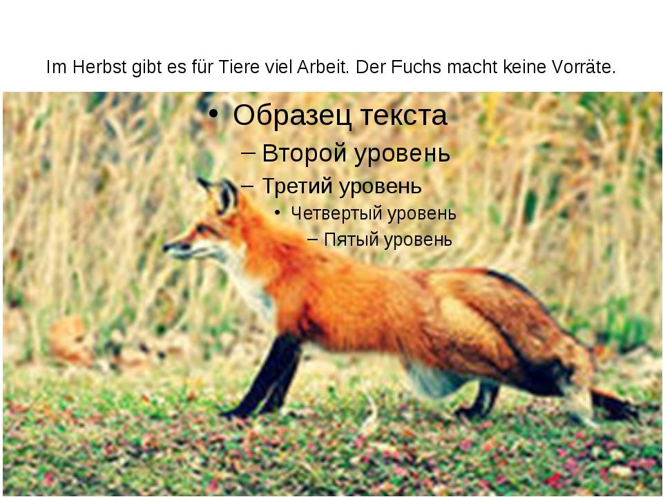 Im Herbst gibt es für Tiere viel Arbeit. Der Fuchs macht keine Vorräte.