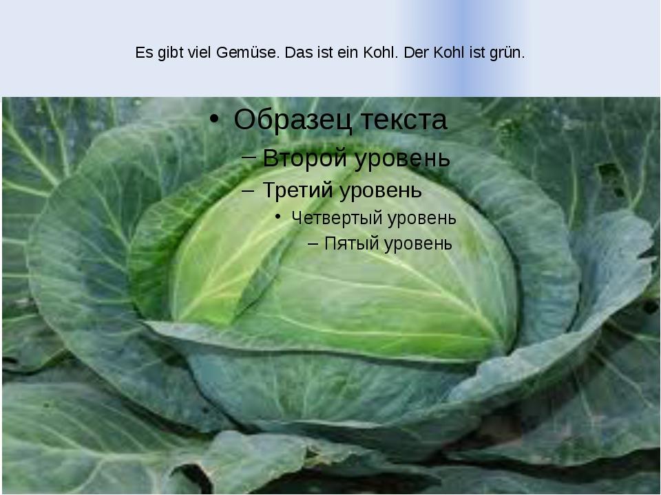 Es gibt viel Gemüse. Das ist ein Kohl. Der Kohl ist grün.