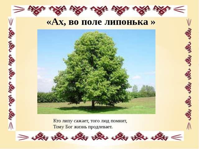 «Ах, во поле липонька » Кто липу сажает, того люд помнит, Тому Бог жизнь про...