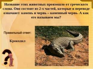 Название этих животных произошло от греческого слова. Оно состоит из 2-х част
