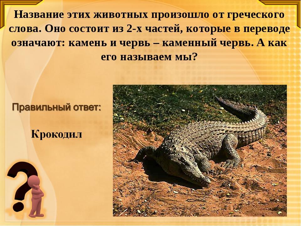 Название этих животных произошло от греческого слова. Оно состоит из 2-х част...