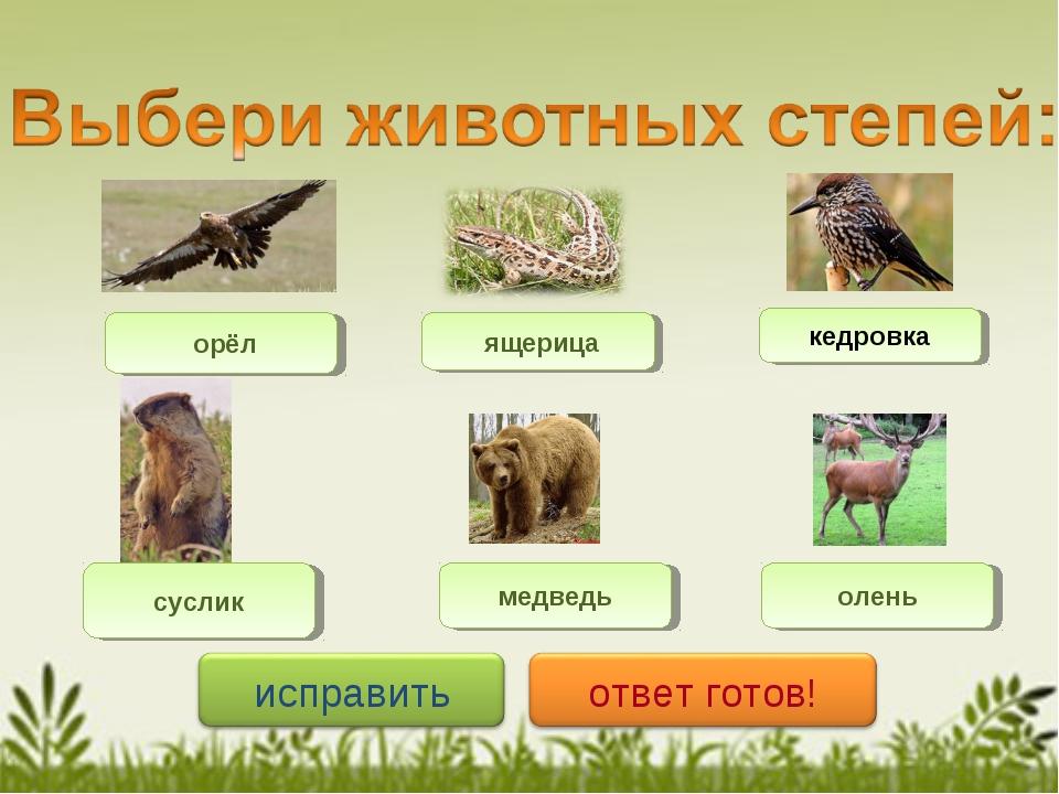 орёл суслик ящерица медведь кедровка олень