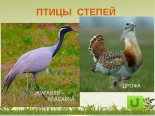 Как сохранить природу степей: Разумная хозяйственная деятельность человека 2.