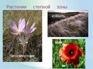 Лекарственные растения: василёк цикорий