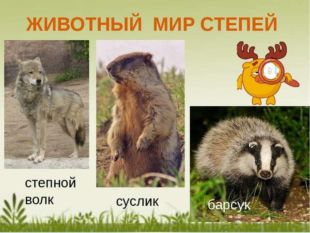 Особенности животного Мира Степной зоны: 1. Окраска под цвет окружающей среды...