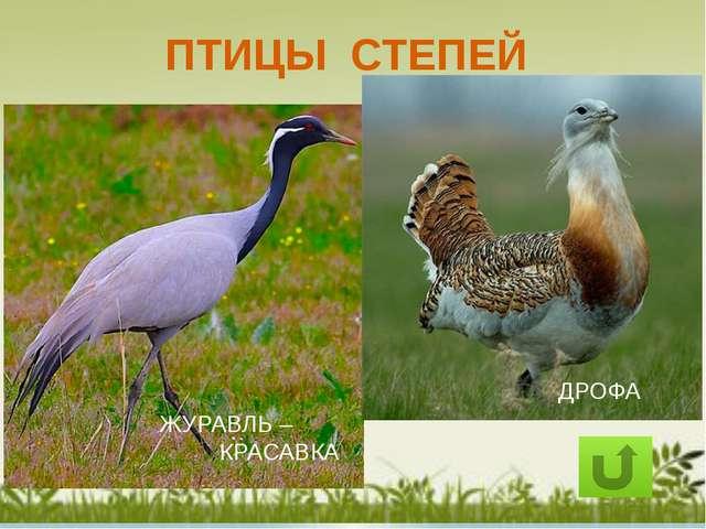 Как сохранить природу степей: Разумная хозяйственная деятельность человека 2....
