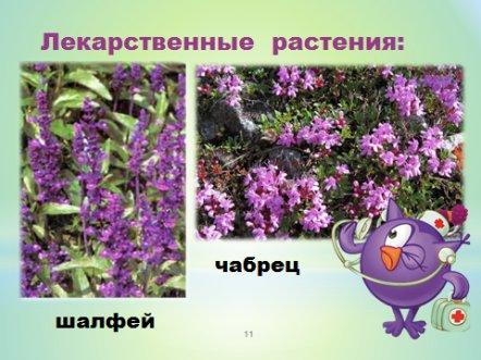 hello_html_m36491cde.jpg