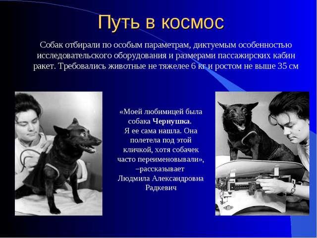 «Моей любимицей была собака Чернушка. Я ее сама нашла. Она полетела под этой...