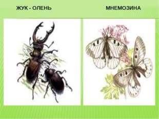 ЖУК - ОЛЕНЬ МНЕМОЗИНА