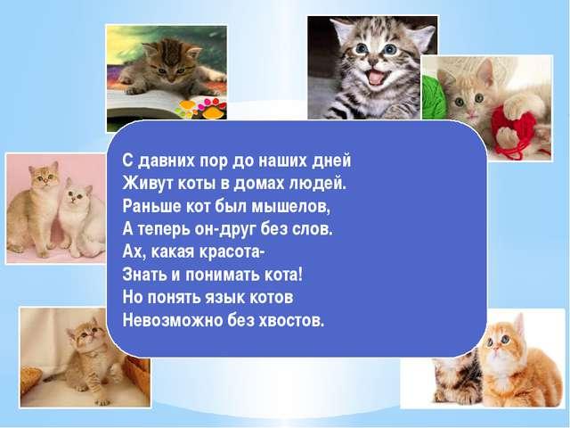 С давних пор до наших дней Живут коты в домах людей. Раньше кот был мышелов,...