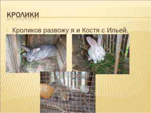 Кроликов развожу я и Костя с Ильей.