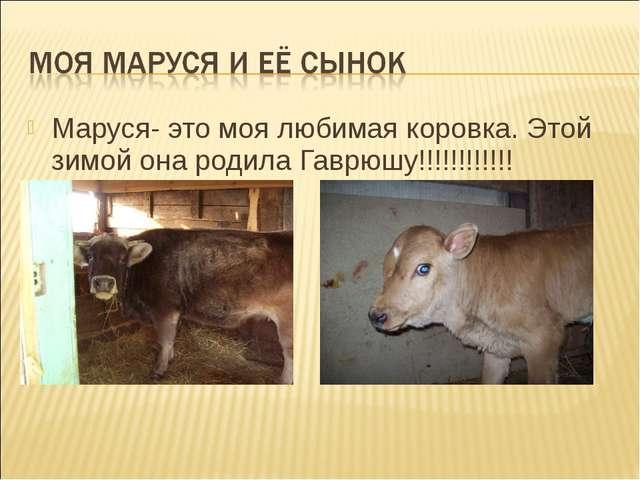 Маруся- это моя любимая коровка. Этой зимой она родила Гаврюшу!!!!!!!!!!!!