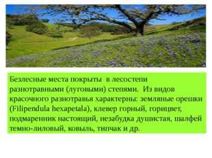 Безлесные места покрыты в лесостепи разнотравными (луговыми) степями. Из вид