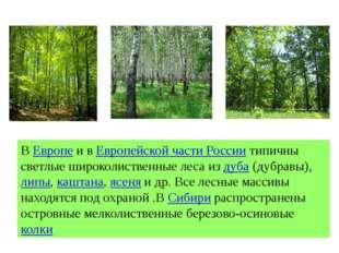 ВЕвропеи вЕвропейской части Россиитипичны светлые широколиственные леса и