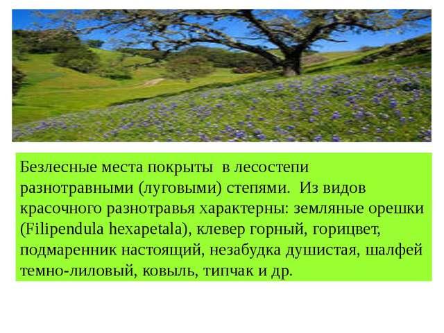 Безлесные места покрыты в лесостепи разнотравными (луговыми) степями. Из вид...