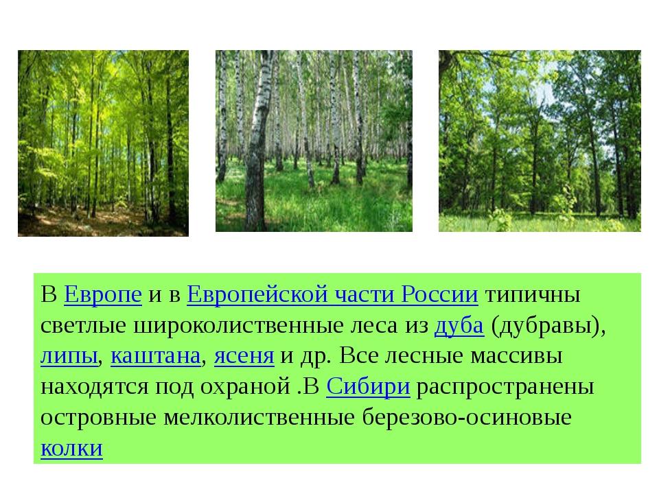 ВЕвропеи вЕвропейской части Россиитипичны светлые широколиственные леса и...