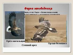 Фауна заповедника Фауна (новолат. fauna, от лат. Fauna — богиня лесов и поле
