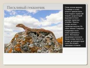 Пискливый геккончик Очень мелкая ящерица. Туловище и голова немного приплюсну