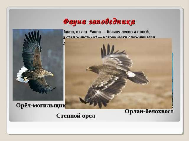 Фауна заповедника Фауна (новолат. fauna, от лат. Fauna — богиня лесов и поле...