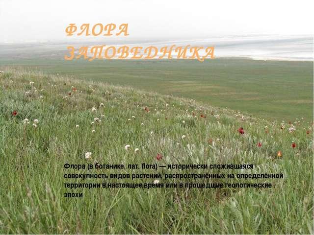 ФЛОРА ЗАПОВЕДНИКА Флора (в ботанике, лат. flora) — исторически сложившаяся со...