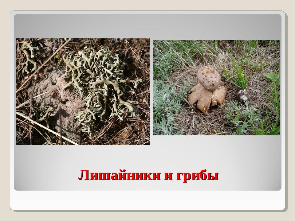 Лишайники и грибы