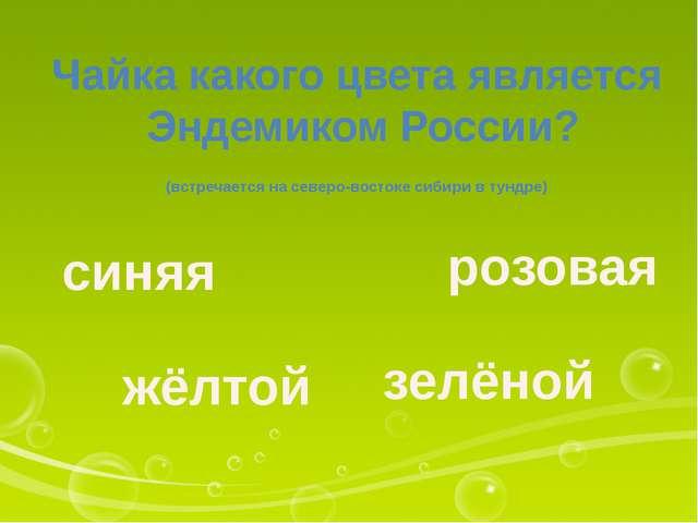 Чайка какого цвета является Эндемиком России? (встречается на северо-востоке...